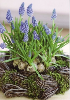 Purple Hyacinth Centerpiece – spotted on Pinterest