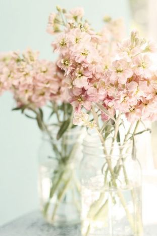 Pink Maison Stock Flowers – shared by Maria Starzyk on Flickr