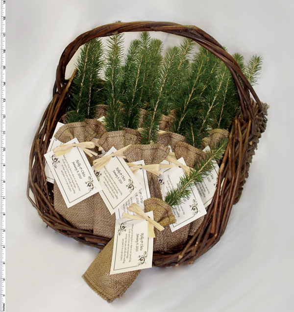 Unique Ideas For Wedding Favours: Eco-Tree Pine Tree Seedling Party Favors