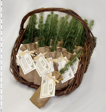 Eco-Tree Pine Tree Seedling Party Favors – available on The Green World Project