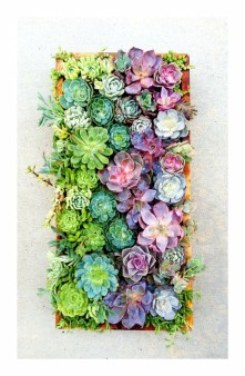 Vertical Succulent Wall (to be used as a photo backdrop)