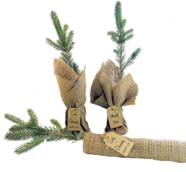 Green Spruce Tree Seedlings Wedding Favors – created and sold by NatureFavors on Etsy