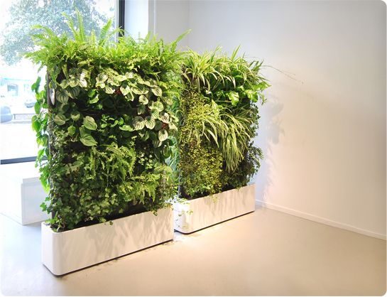 Living Greenery Walls with White Bases for Perimeter Decor or Room Dividers – spotted on Pinterest