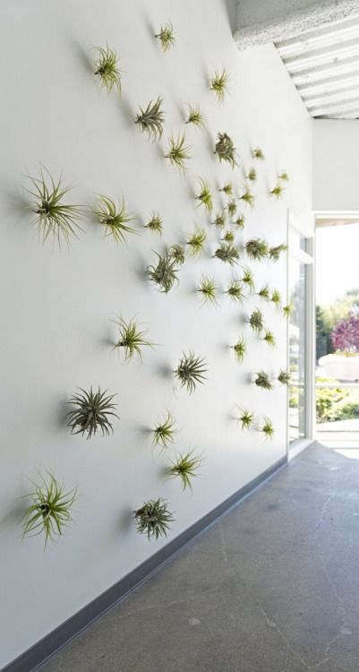 Entrance of Air Plants on White Wall – shared in a roundup post by Tickled Pink