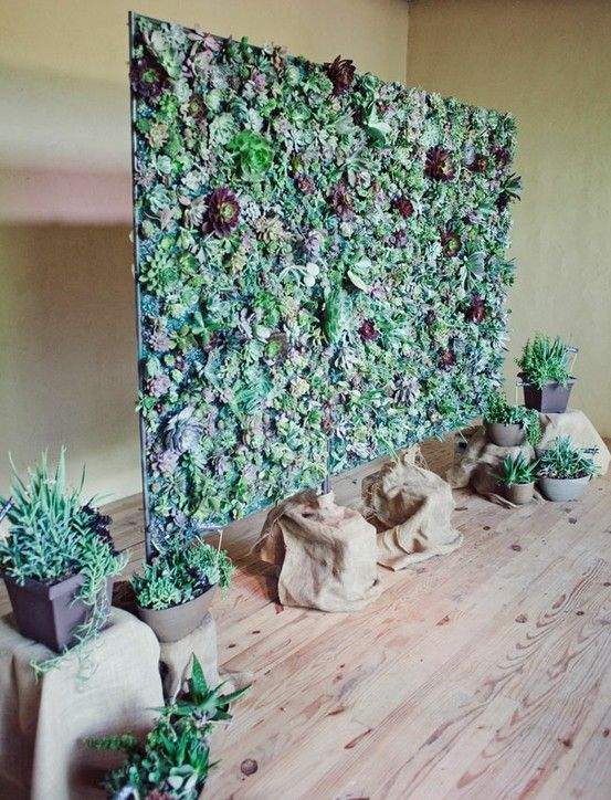 Succulent Photo Backdrop – shared in a roundup post by BuzzFeed